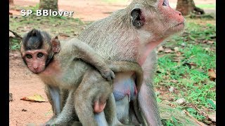 Monkey And Baby - 67 Sweetpea Wrestling Today