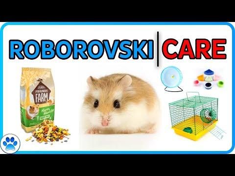 Roborovski Dwarf Hamster Care Guide | Hamster Care For Robo Dwarf Hamsters