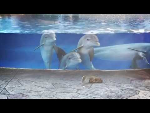Cute Dolphins Check Out Squirrels at Seaworld Orlando Dolphin Nursery