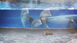 Cute Dolphins Check Out Squirrels at Seaworld Orlando Dolphin Nursery thumbnail