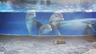 「この小さい生き物、すごーい!」初めて見るリスに興味津々のイルカの赤ちゃん