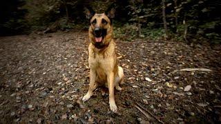 Ein Tag mit dem Diensthund der Bundeswehr Jerry