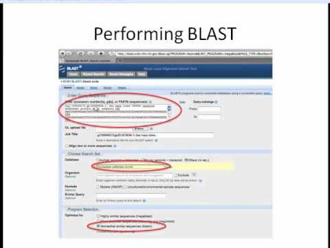 BLAST: Basic Local Alignment Search Tool