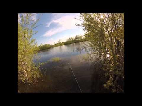 ловля озерного карася на удочку