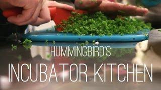 Incubator Kitchen