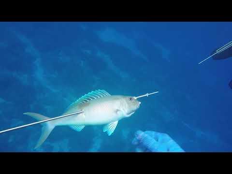 Tinian spearfishing