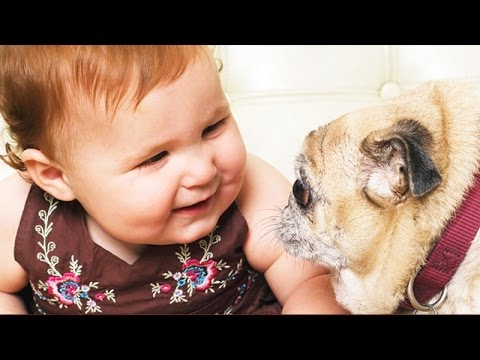 Dogs annoying babies – Funny baby and dog compilation