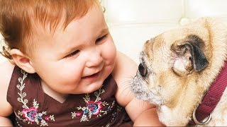 dogs annoying babies funny baby and dog compilation