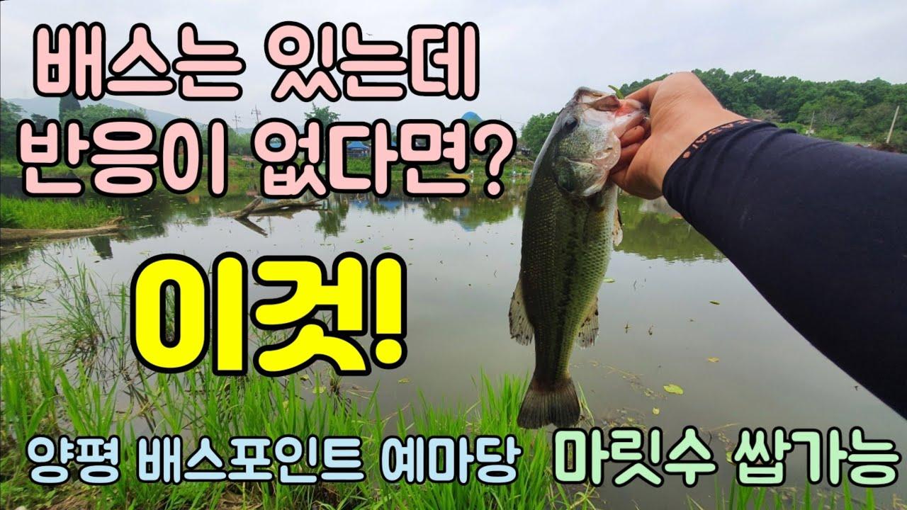양평 배스포인트 예마당 서울근교 수도권 배스낚시 안나올땐 와키리그!!