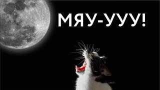 Мартовские коты. звук. вой.