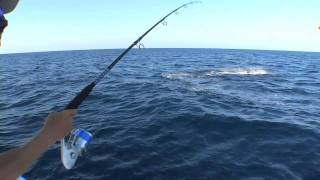Sailfishing on 2011 Contender 39 ST
