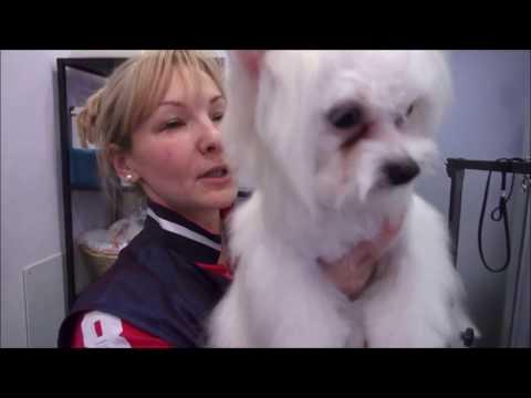Вопрос: Как бороться со слезными пятнами у кошек и собак?