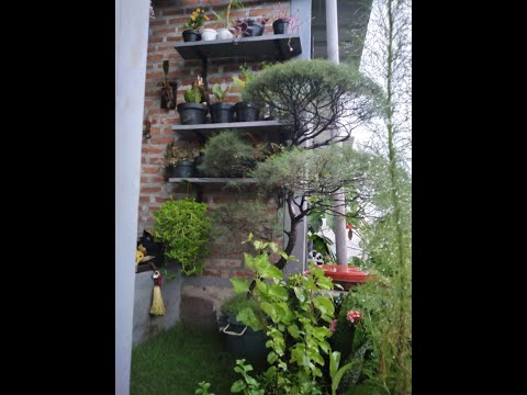 make-over-teras-dan-taman-minimalis-[part5]-#tarefamilychannel-#tamanminimalis