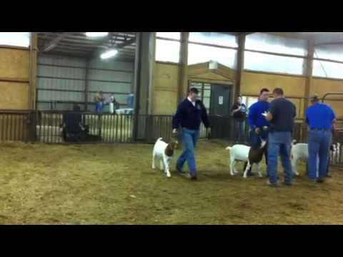 Pittsburg County Free Fair Goat Show