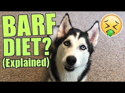 Raw Diet For Dogs - BARF DIET For Siberian Husky! (Changing Dog Food)