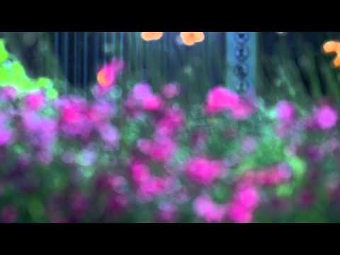 The Ballad Of Loreley- 21 Love Hotel
