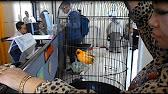 Binatang Tahanan Karantina