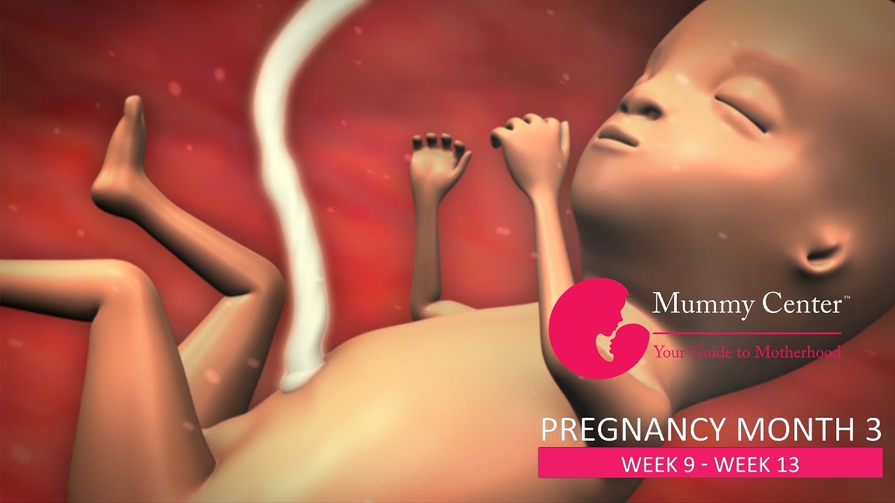 3rd Month of Pregnancy – Definitive Guide For Pregnancy ...