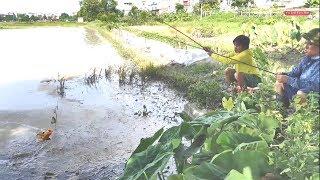 Không ngờ ruộng lúa lại câu được nhiều cá chép  đến vậy
