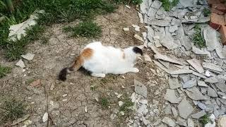Хорошо в деревне летом. Деревенские коты. Видео -1