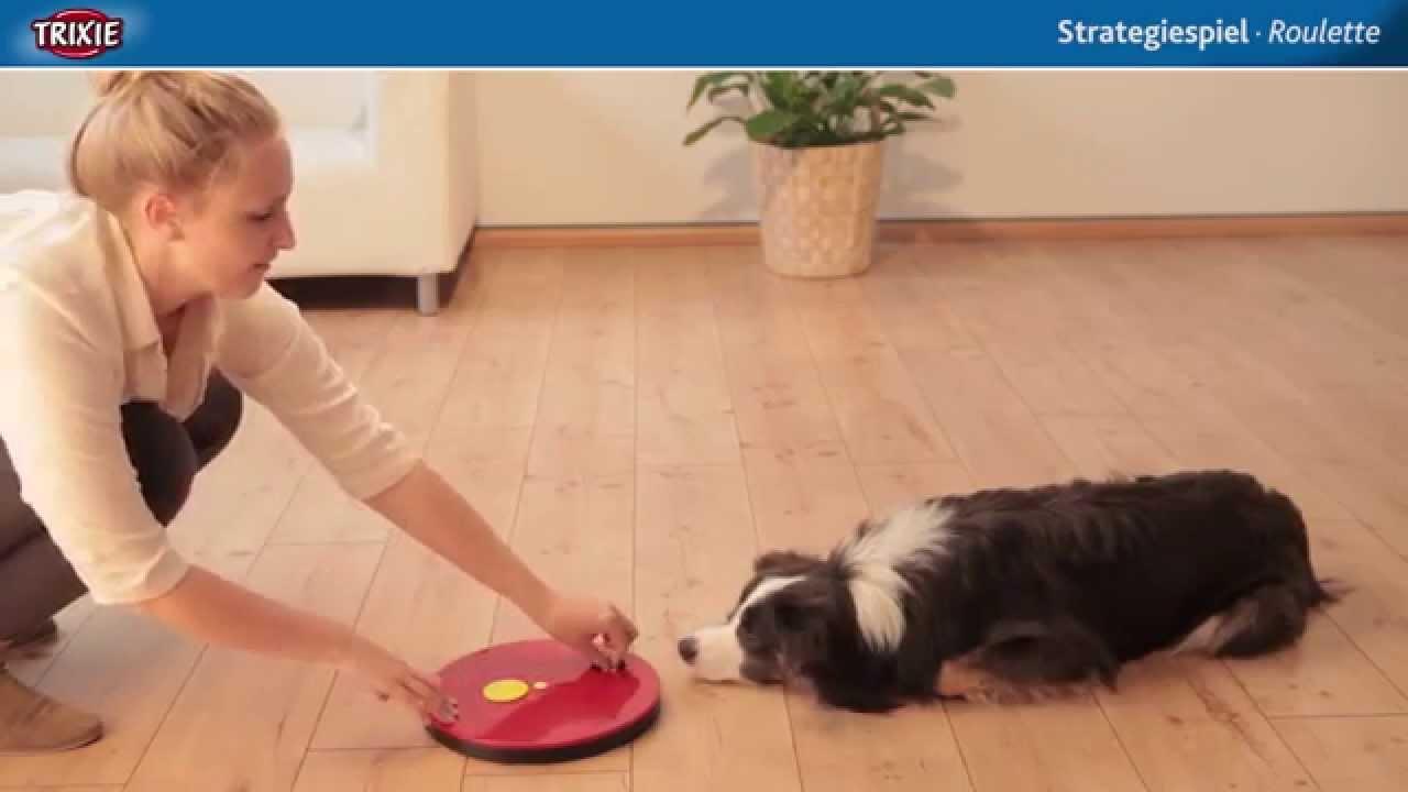 Dog Activity Strategiespiel F U00fcr Hunde Roulette  Intelligenzspielzeug F U00fcr Hunde