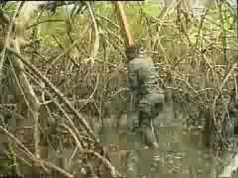 Troupes de Marine - French Marine Troops - Parcours Mangrove