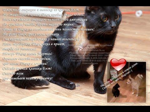 Животные инвалиды Спасение кота jivotnie v priyute Novosibirsk Dari dobro приют Дари добро