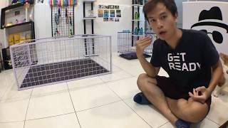 Cách huấn luyện chó cơ bản (#2 - Bản Livestream) Dạy cún DỪNG QUẬY khi sai   Chi tiết   BossDog
