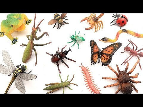 Bug Names For Kids Insects Toys Collection In Real Life! Centipede Snake Tarantula Mantis Scorpion