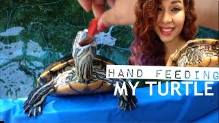 Hand feeding my turtle