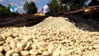 30 bags of coffee stolen at Rukira coffee factory in Nyeri