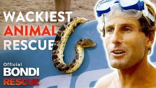 WACKIEST Animal Rescues on Bondi Rescue