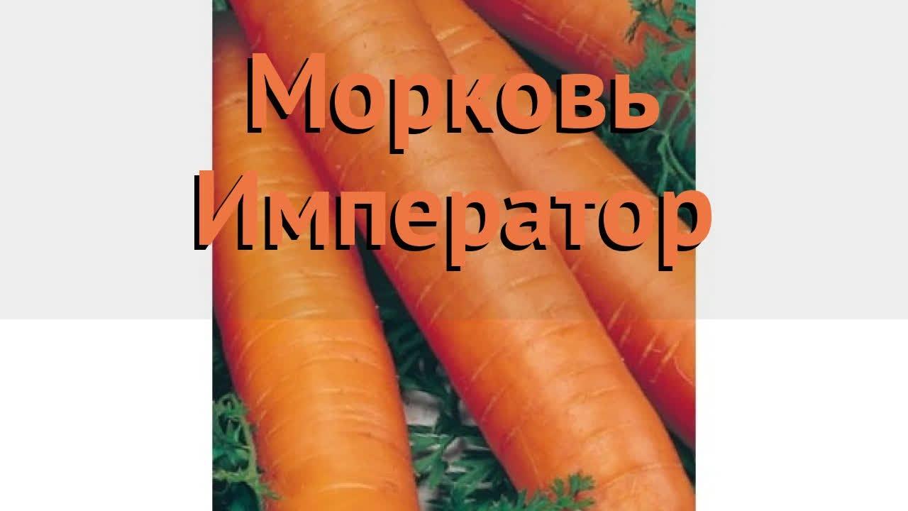 семена моркови император
