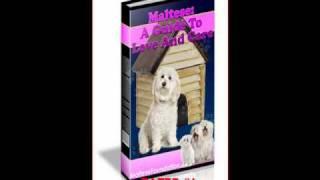 Maltese Training Guide - Best Maltese Puppy Training