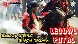 Banteng Suro Raja Mberot Liar Srudukan Maut | LEGOWO PUTRO Live Sugihwaras Prambon 2018