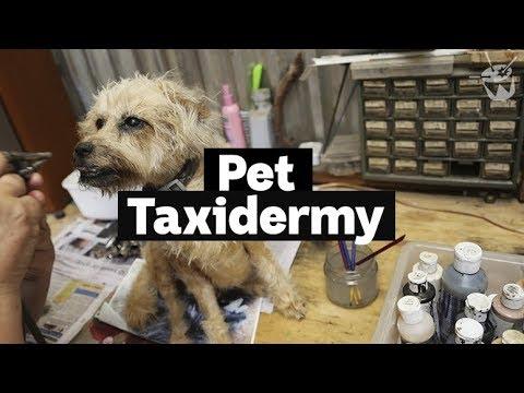 HACK: Inside a pet taxidermy studio