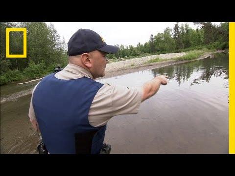 Protecting Alaska's Salmon   National Geographic
