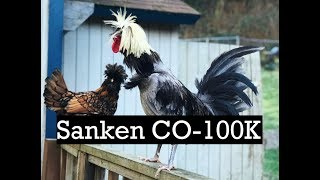 Elastic Audio Test with Bird Vocalizations Recorded with a Sanken CO-100K