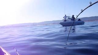 Kayak Fishing for White Sea Bass - 3 NCKA Hookups in one Video!