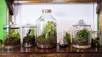 Satisfying & Relaxing Terrarium Art