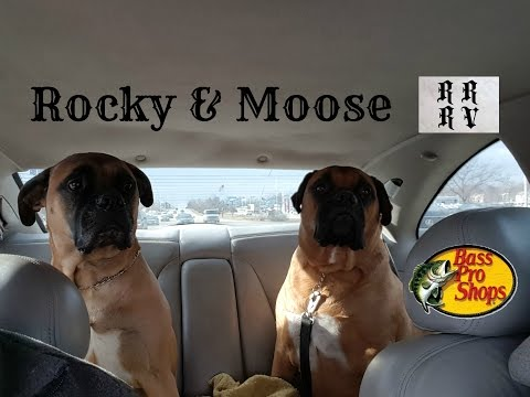A typical dog day at Bass Pro Shops with Moose & Rocky