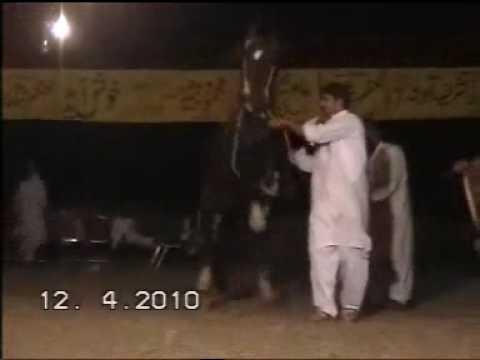 Nisar Stud Farm, Mela Ghora Dance Korotana, Gujran...