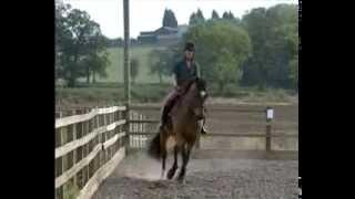 Верховая езда - обучение, коррекция баланса(Видео о работе в седле, основы верховой езды, обучение и коррекция баланса, работа с лошадью, конный спорт,..., 2014-01-22T12:15:24.000Z)
