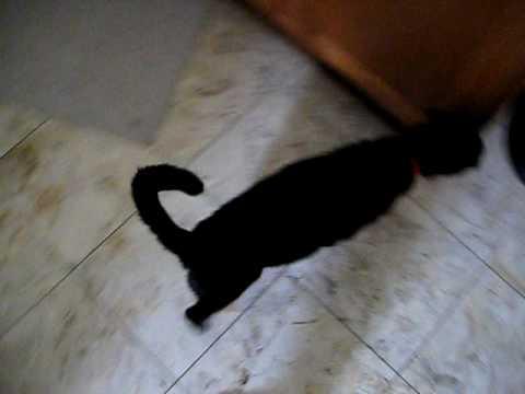 Yatsu the Black Cat - Mezame
