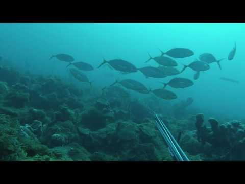 chasse sous marine martinique avril 2016-team imersion