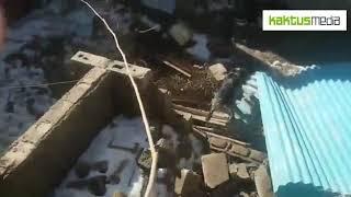 Мертвые собаки в Маевке