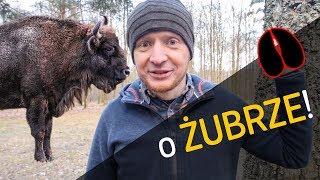 O Żubrze! - co, gdzie i dlaczego? - o Lesie #22