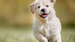 Top 50 Most Popular Dog Names in America | Top 50 Dog Names | Unique Puppy Names
