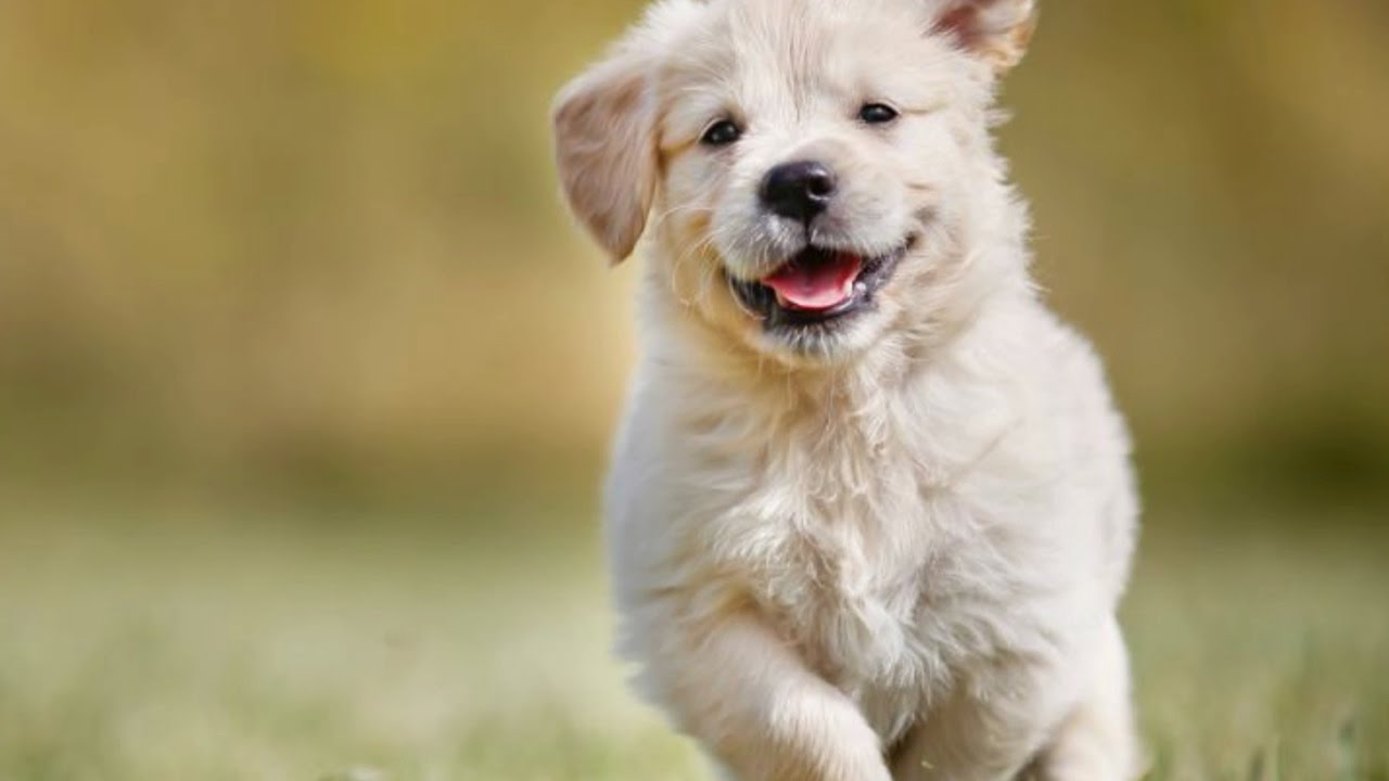 top 50 most popular dog names in america top 50 dog names unique