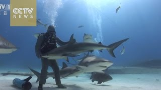 Watch: Woman hypnotizes sharks, removes fish hooks from their mouths